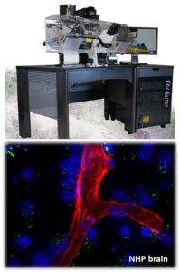 Penn State College of Medicine's fluorescene microscope is pictured with a microscopy image taken by it.