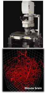 Penn State College of Medicine's multiphoton microscope is seen, along with a microscopy image taken by it.