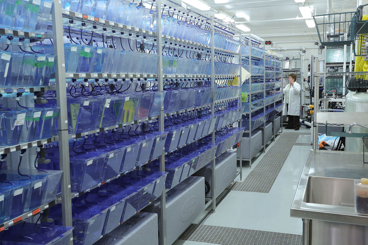 Five rows of fishtanks with bright blue water are pictured on racks. A woman is seen standing in a lab coat at the end of the racks.