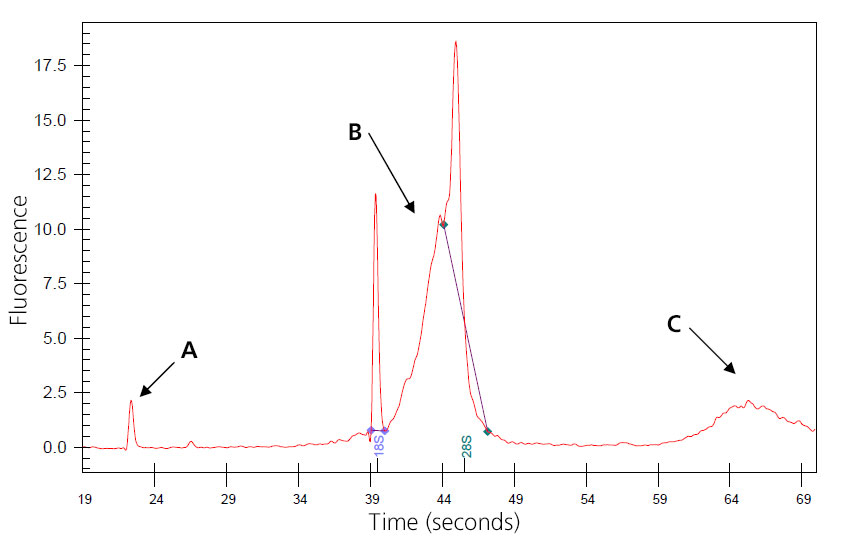 A graph depicting genomic-DNA-contaminated RNA shows the time in seconds on the x-axis and the fluorescence on the y-axis. Three points are marked with arrows and the letters A through C.