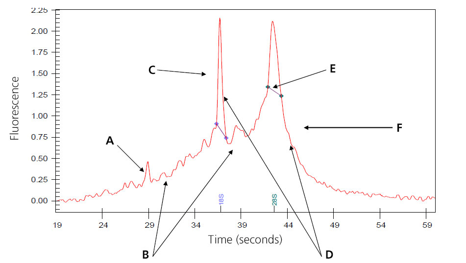 A graph depicting partially degraded RNA shows the time in seconds on the x-axis and the fluorescence on the y-axis. Six points are marked with arrows and the letters A through F.