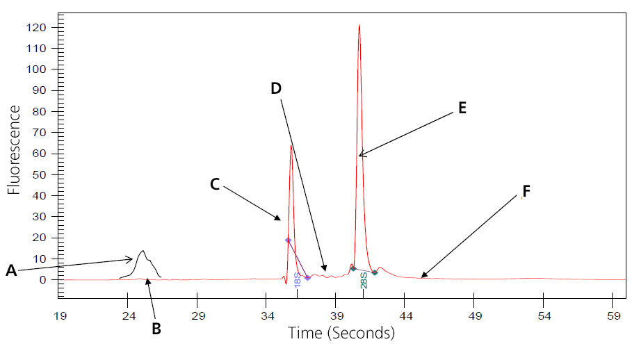 A graph depicting perfect RNA shows the time in seconds on the x-axis and the fluorescence on the y-axis. Six points are marked with arrows and the letters A through F.